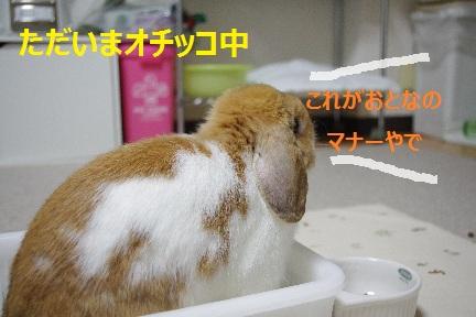 3_20110903223837.jpg