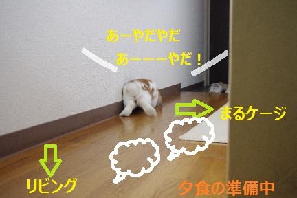 7_20110902193415.jpg