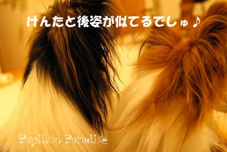 2008071250.jpg