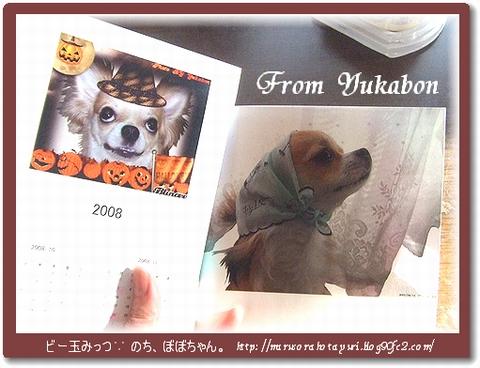 カレンダーにフォトブックに★ From Yukabon