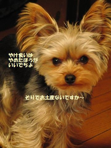 CIMG7987.jpg