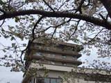 桜5月2日1