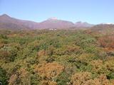 紅葉2007102502