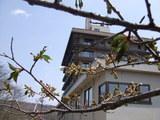 20070505桜