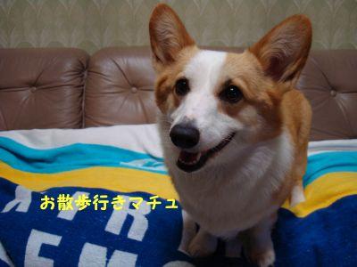 20090610-2_400.jpg