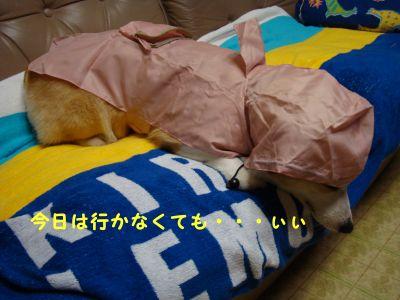 20090610-4_400.jpg