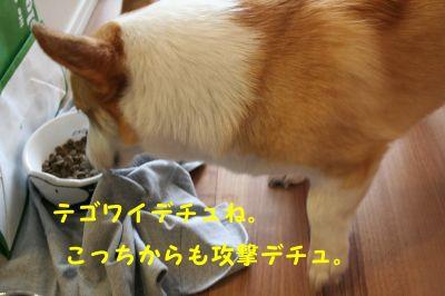 20090621-5_400.jpg