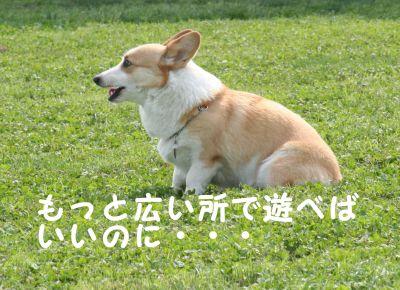 20090622-12_400.jpg