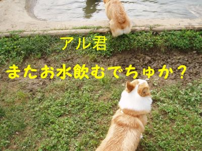 20090622-4_400.jpg