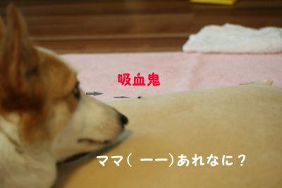 20090627-1_400.jpg