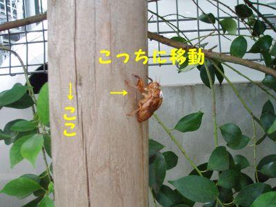 P1010176_1_400.jpg