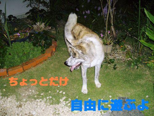 2007年01月01日_IMGP2702
