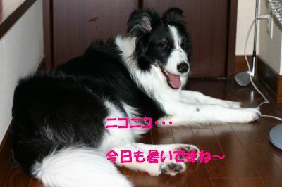 IMG_3831_convert_20110629102737.jpg