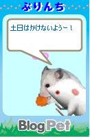 ぷりんちちゃん_2
