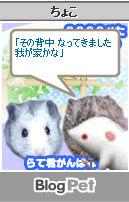 ちょこちゃん_01