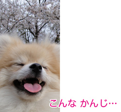 DSC000627.jpg