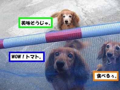 IMG_2531.jpg