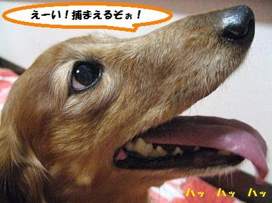 IMG_2642.jpg