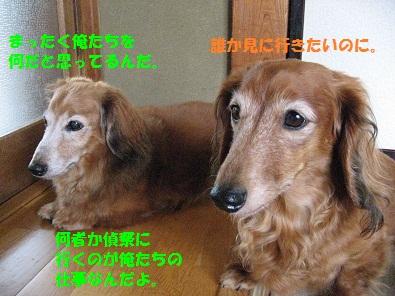 IMG_2733.jpg