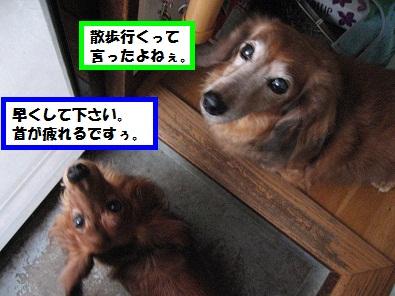 IMG_2832.jpg