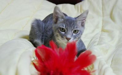 ぐりちゃんと花