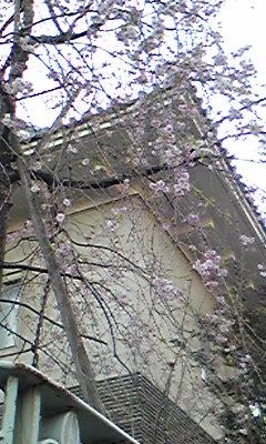町並みと桜
