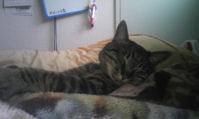 ガブ寝る2