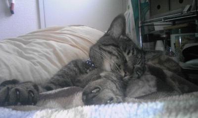 ガブ寝る4