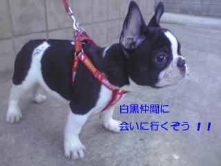 shirokuro 1