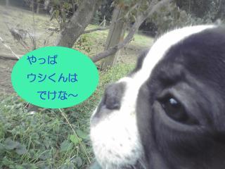 shirokuro 4
