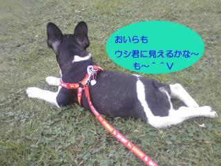 shirokuro 8