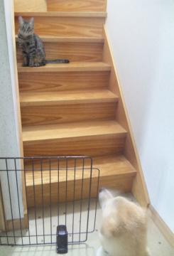 階段の二人