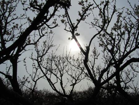 万博公園の梅