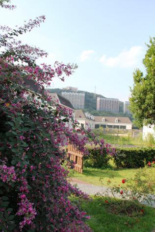 花とアクティビティハウス