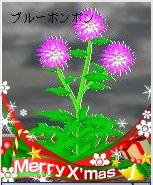 くる花クリスマスバージョン