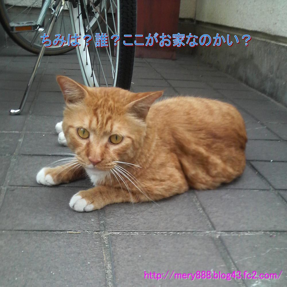 研究所の猫01
