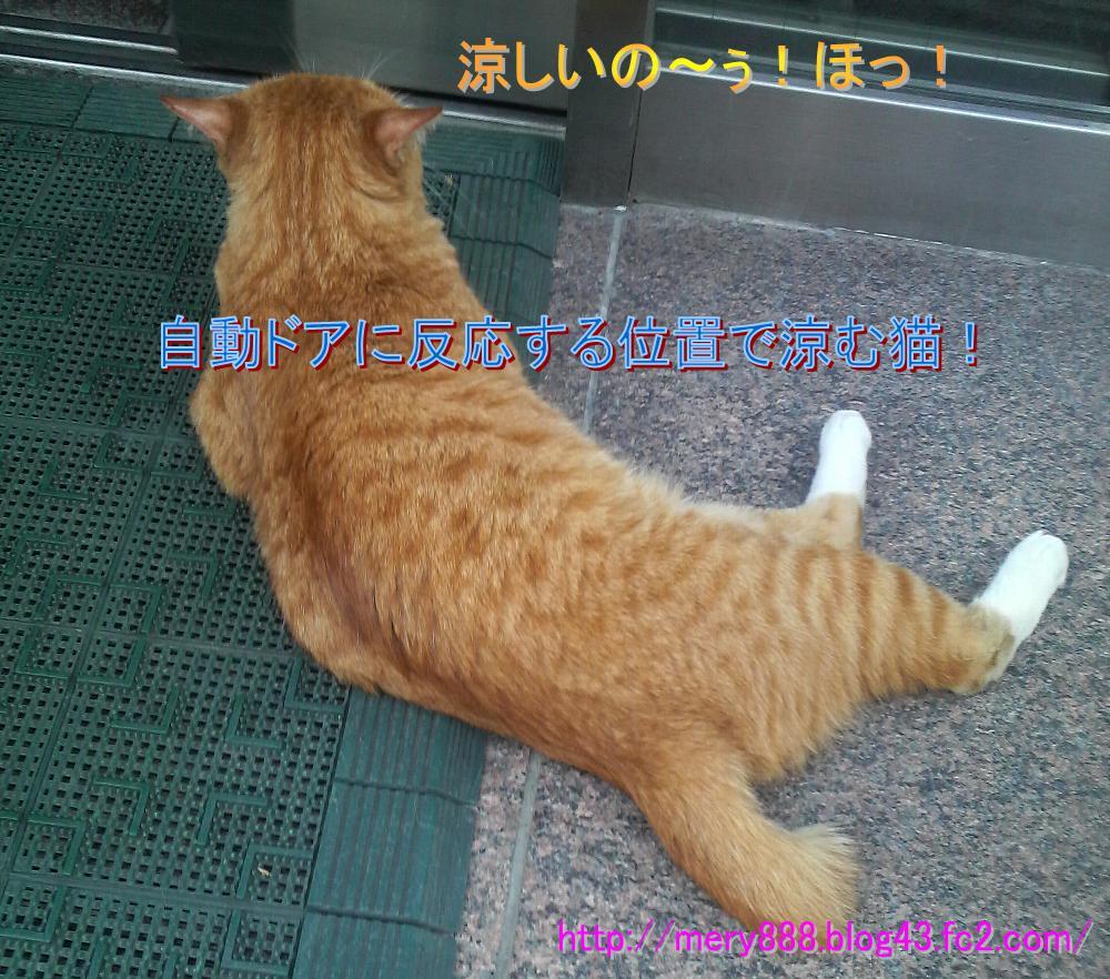 研究所の猫02