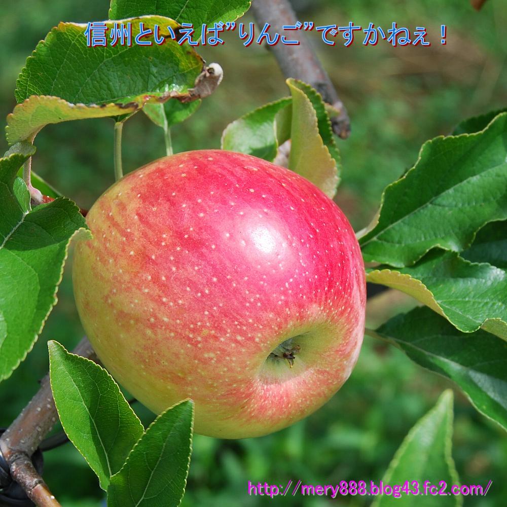 信州りんご01