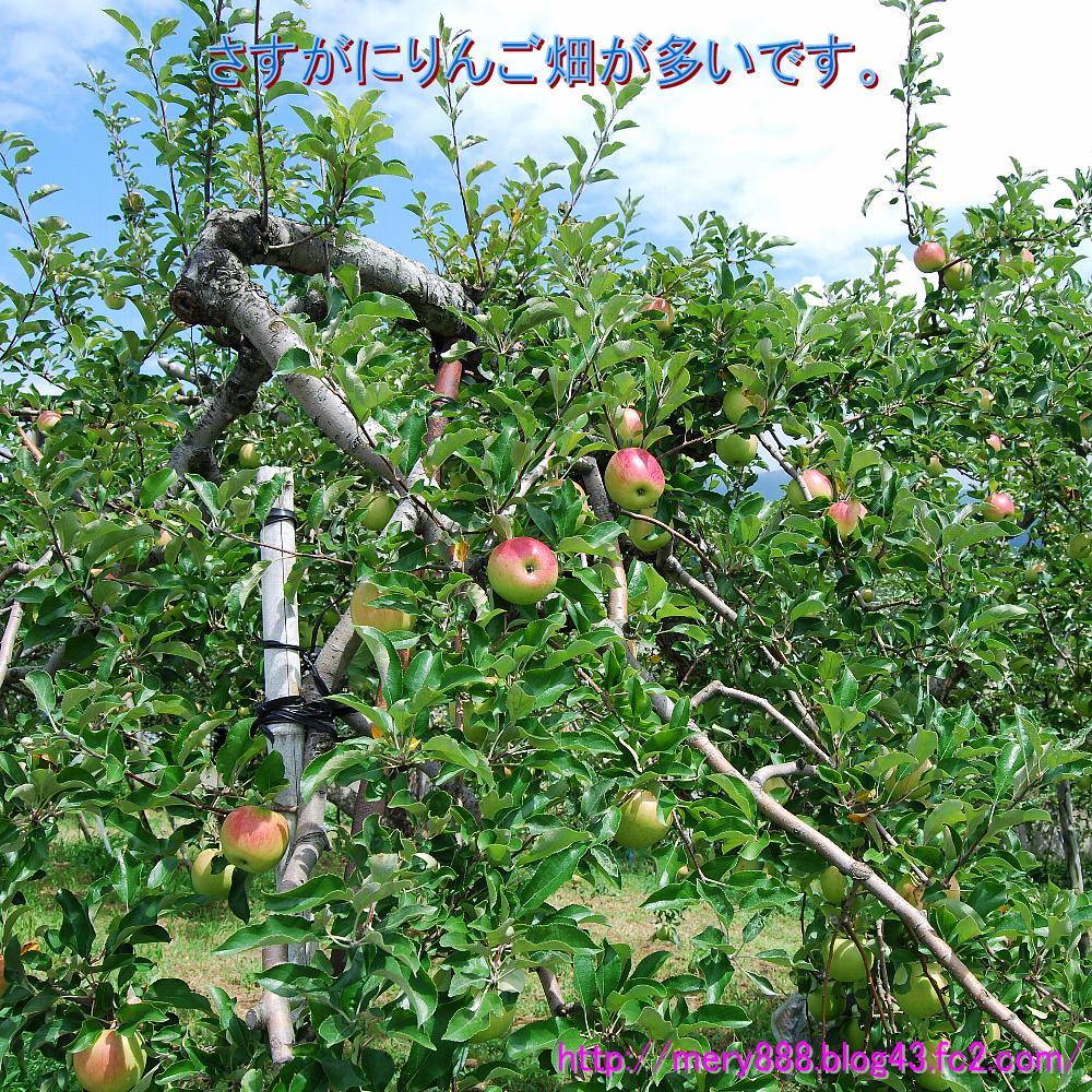 信州りんご02
