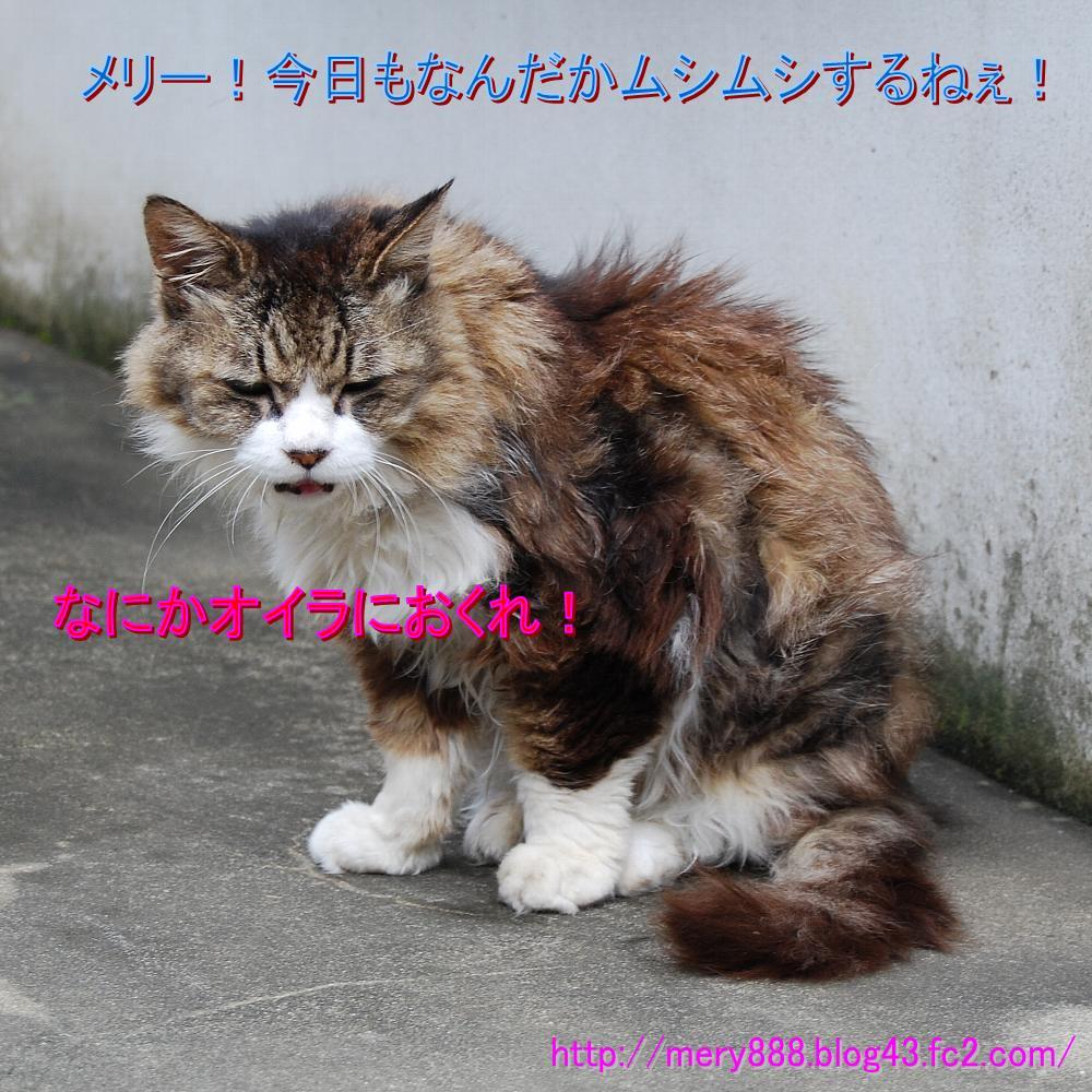 メリー2008_08_24_01