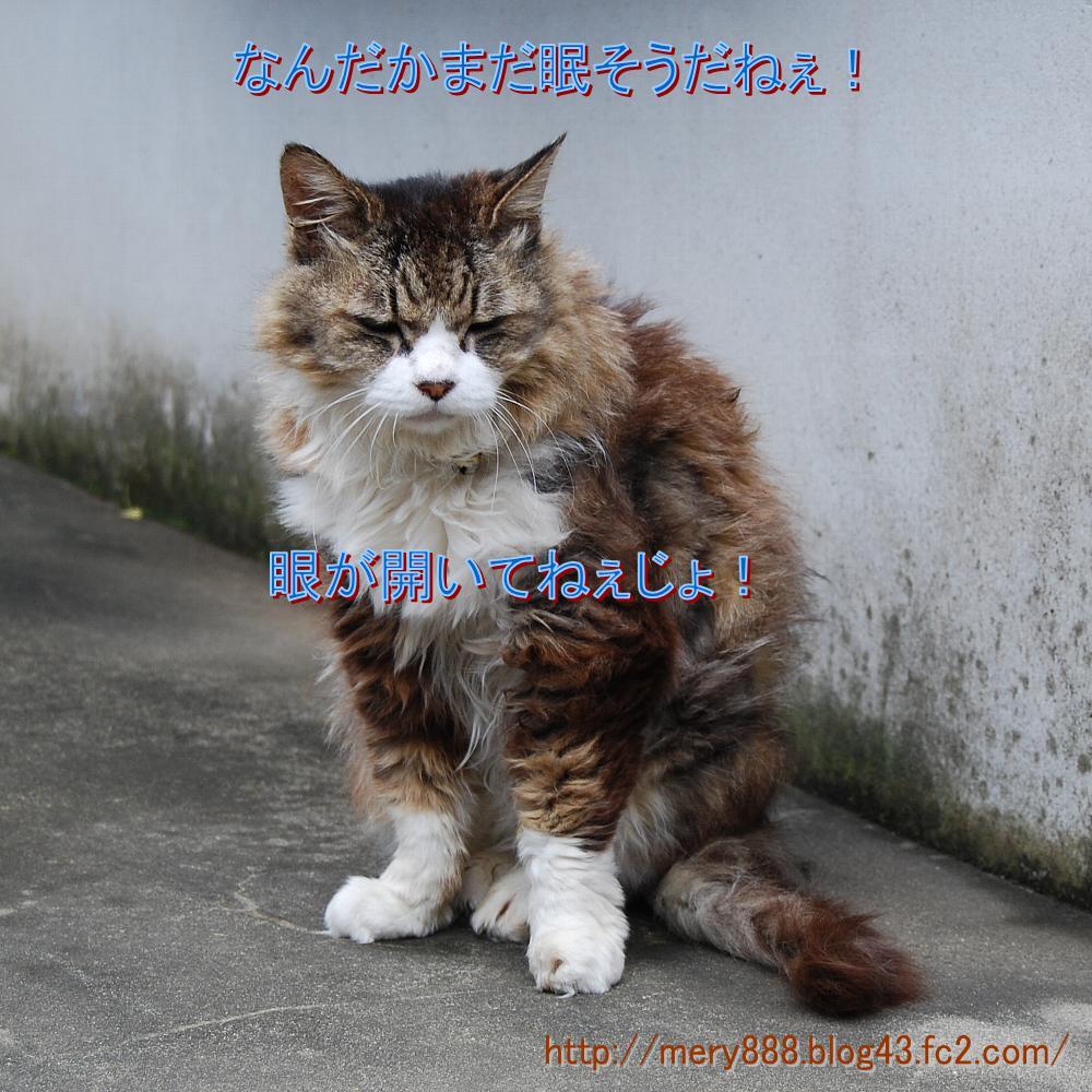 メリー2008_08_24_02