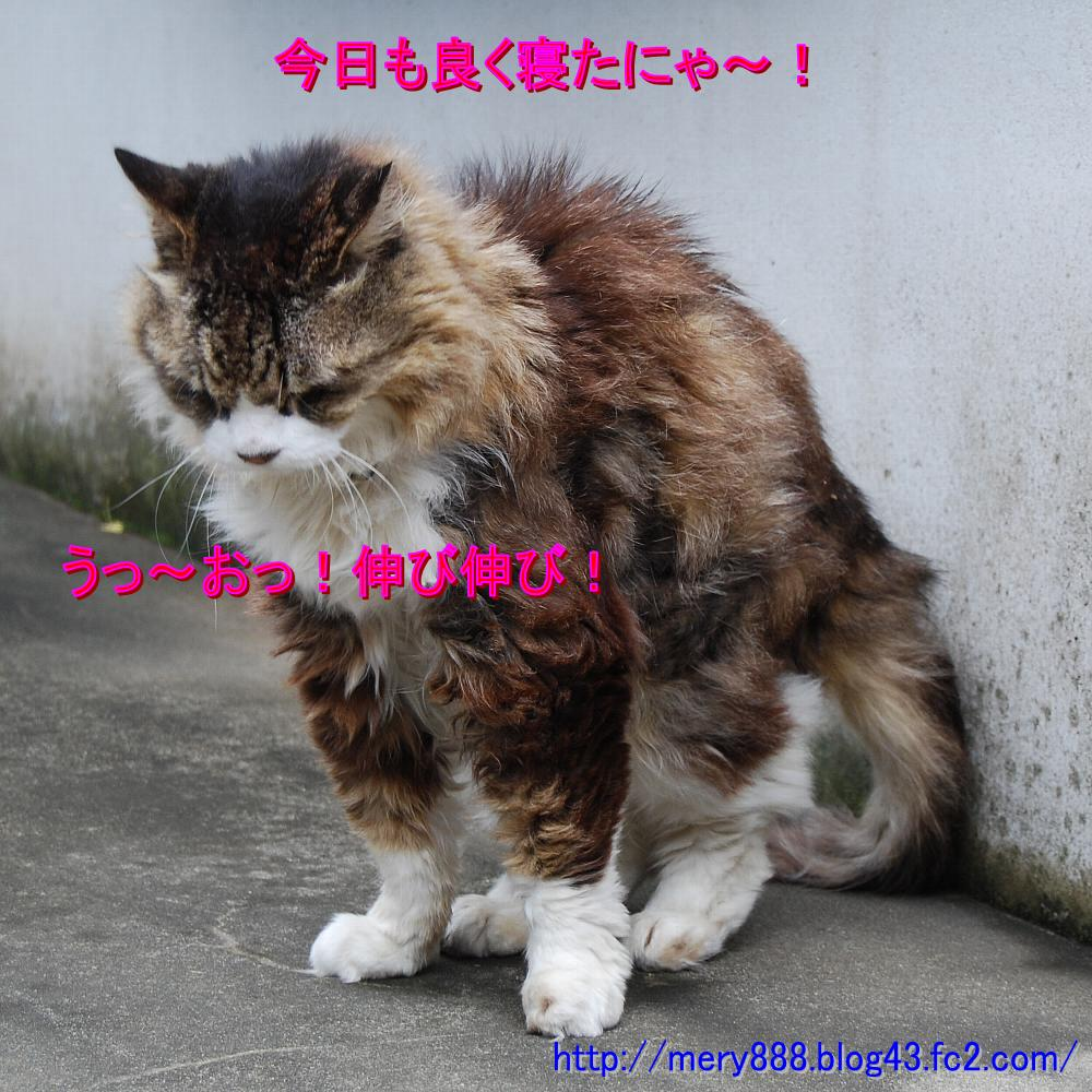 メリー2008_08_24_03