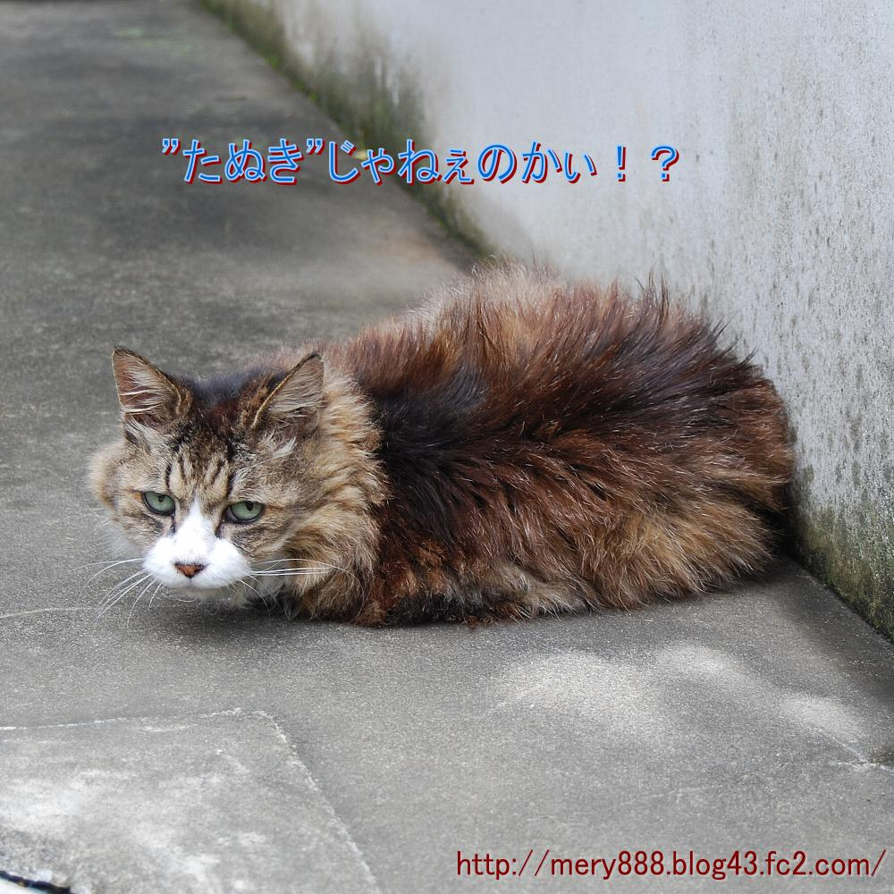 メリー2008_08_24_04