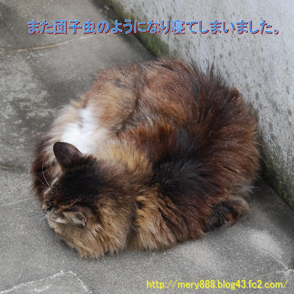 メリー2008_08_24_05