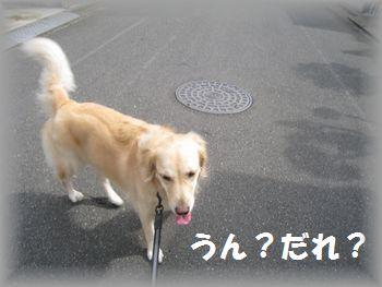 IMG_6954.jpg