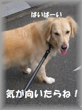 IMG_6968.jpg