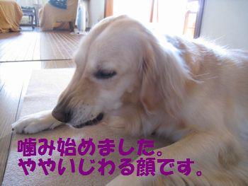 IMG_7084.jpg