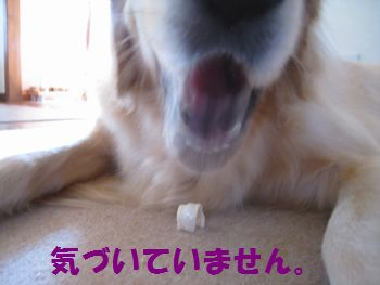 IMG_7092.jpg