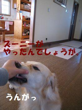IMG_7235.jpg
