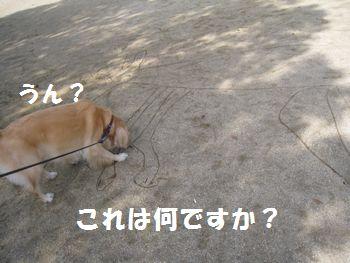 IMG_7260.jpg